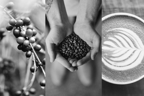supply chain blockchain coffee beans hand with coffee cup of coffee by nathan dumlao via unsplash 100811854